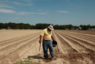 El sector agrícola argumenta que es uno de los más afectados por la prom...
