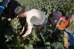 Desempleo entre hispanos sube dos décimas hasta el 12.6 por ciento 44c3a...
