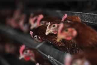 Al menos 43 personas han fallecido en un incendio en una granja avícola...