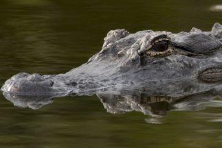El animal representaba un peligro para la población, pues ha devorado pe...