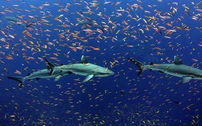 Nuevo estudio analizó datos de captura y previsiones de pesca des...