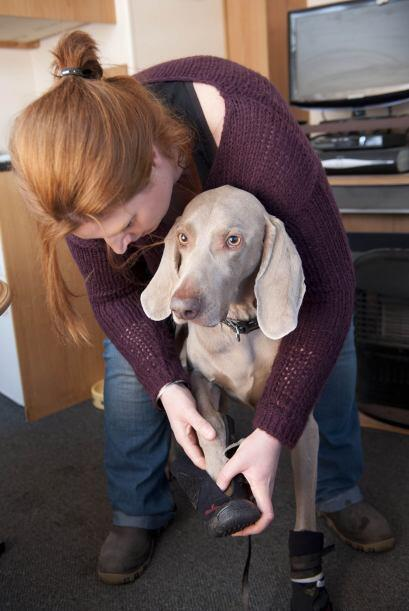 Tan pronto como aparecieron los síntomas, Julie acudió a los veterinario...