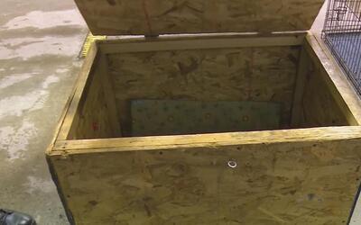 En video: un padre en Indiana encerraba a su niña de tres años en una caja