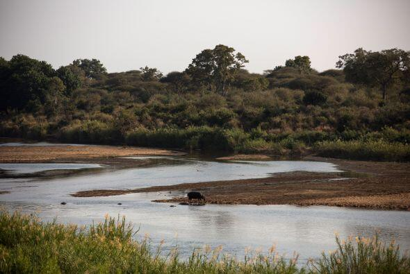 Estos animales se encuentran en cautiverio, pero su hábitat natur...