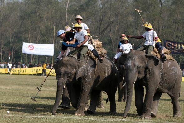 Los  elefantes provienen de diversas partes del mundo como Nepal, Reino...