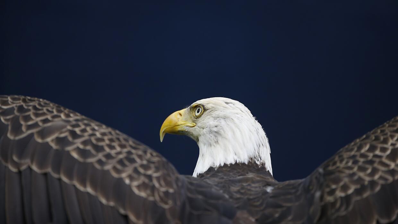 Las especies en peligro a las que afectaría el 'muro de Trump' GettyImag...