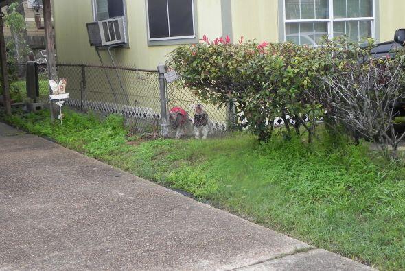 Fuímos a la casa donde nos dijeron que podría estar y había unos perros...