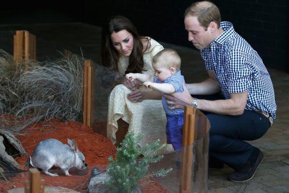 El pequeño quedó encantado con este pequeño bilby, una especie en peligr...