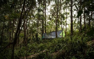 ¿Cómo puede ayudar a sembrar árboles y contribuir al bienestar del planeta?