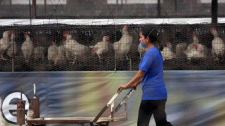 Unos 3.8 millones de aves han sido sacrificadas hasta el momento por un...