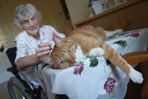 Según la dueña del gato, Eva Kullman, las visitas de Mogli aumentan la c...