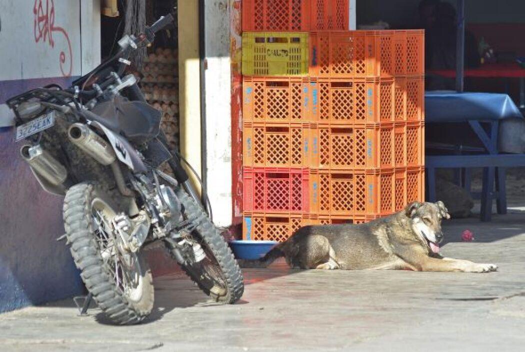 """Algunos lo llaman """"Hachi"""", emulando al famoso perro japonés """"Hachiko""""; o..."""