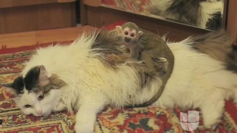 Una gata le salvó la vida a un monito en un zoológico