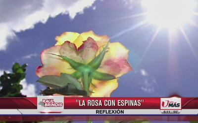 Reflexión: La rosa con espinas