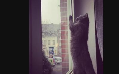 La adorable reacción de un gatito al presenciar su primera caída de nieve