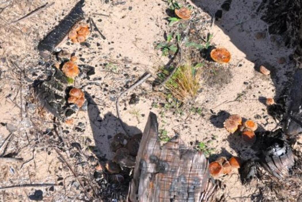 Bastrop State Park tras incendio de 2011