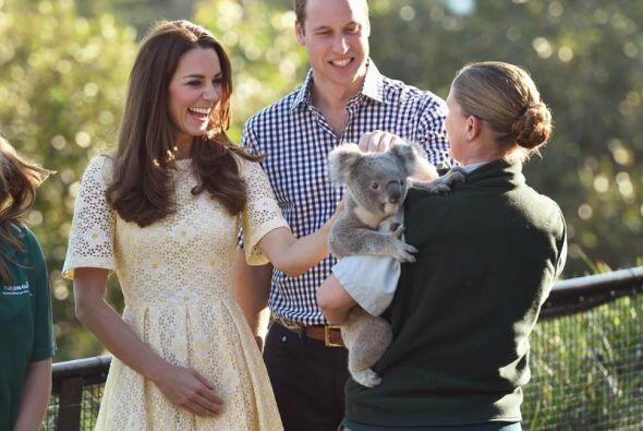 A cargo del personal del zoológico, el pequeño koala fue acariciado por...