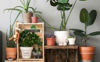 Los beneficios de tener plantas en la casa