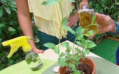 Conoce las plantas que te ayudan a limpiar tu casa