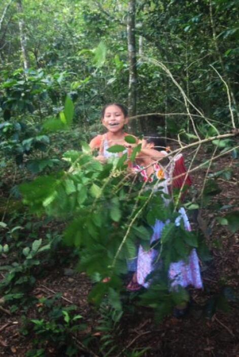 Los niños campesinos son obligados a trabajar en las plantaciones para p...