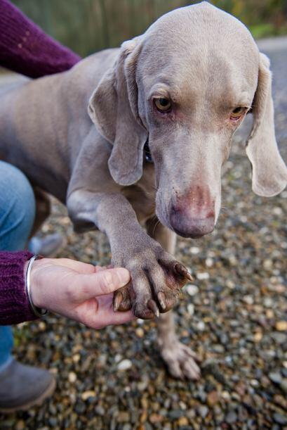 Desde que Bluey era cachorro, su dueña, Julie Farr, de 38 años, descubri...
