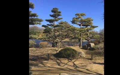 Descubriendo Chicago: Los jardines japoneses del jardín botánico