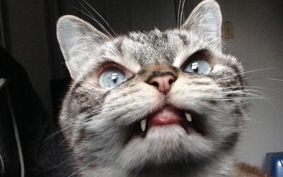 Mitad gato, mitad vampiro