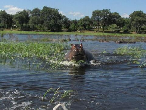 Este curioso hipopótamo estaba teniendo un día bastante ag...