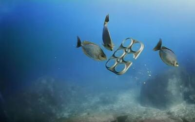 Beer company invents biodegradable six-pack rings