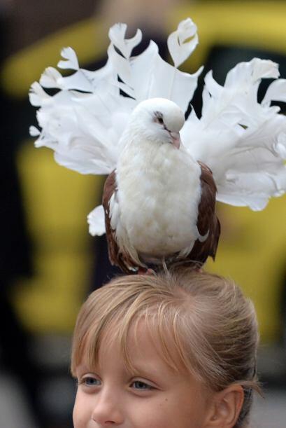 Mientras esta chica posa para la foto, una paloma posa también pe...