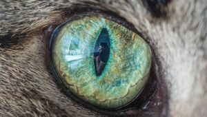 Mira el cosmos en los ojos de los gatos