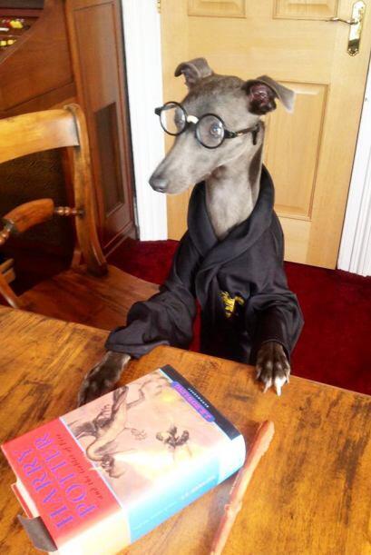 Rupert acepta todos los vestuarios que Janet diseña para él.