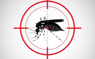 salud mosquito