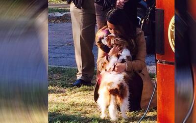 Nina Pham, enfermera curada de ébola, se reúne con su perro