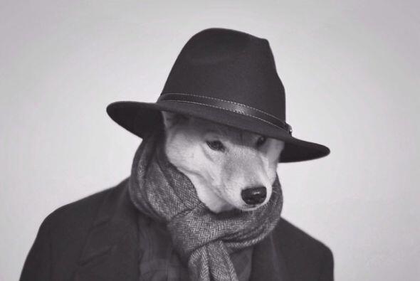 Este canino ama todos los accesorios que puedan resaltar su look.