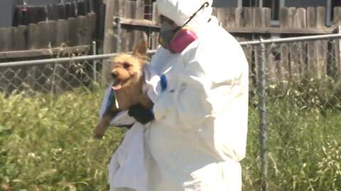Encuentran más de 80 mascotas en una casa de California