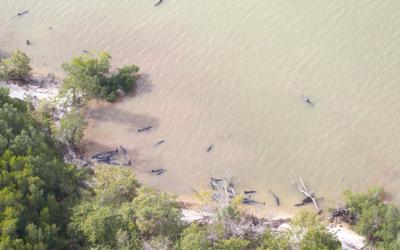 Orcas negras muertas en la costa de Florida