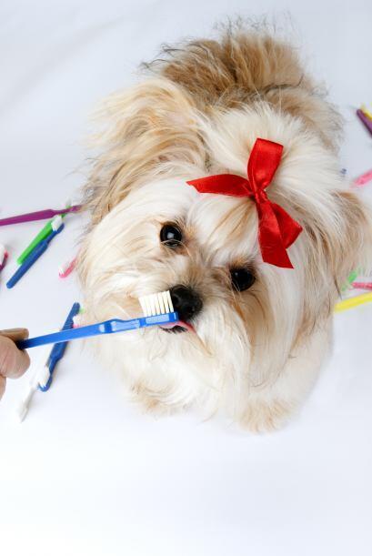 Primero hay que comprender que por ejemplo, el pelaje de los perros sufr...