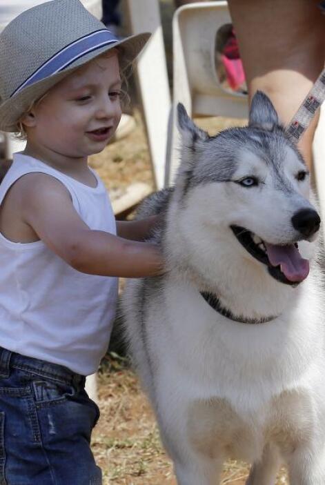 Bebés: Aunque los bebés son demasiado pequeños para cuidar a una mascota...