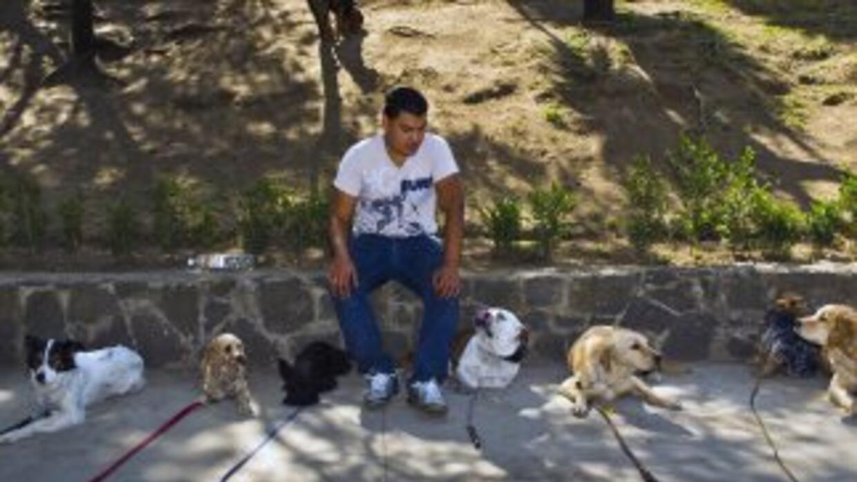 Ciudad de México aprobó otorgar un castigo de hasta cuatro años de prisi...