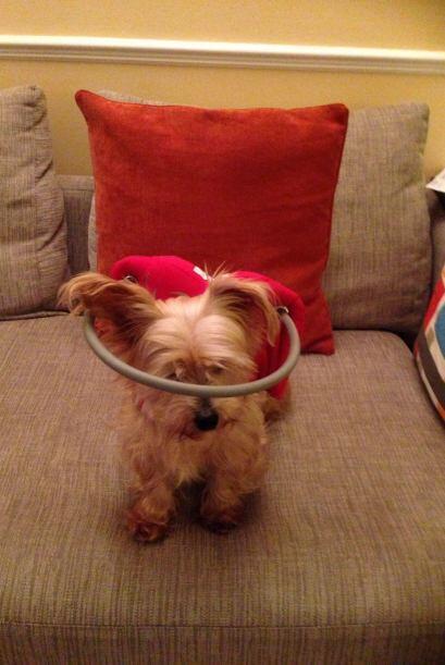"""También existe una asociación llamada  """"Second Chances For Blind Dogs"""" q..."""