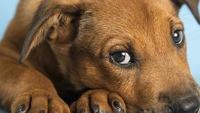 Adopción de mascotas