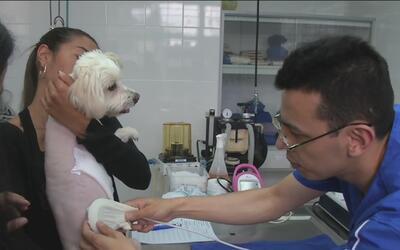 Cirujanos colombianos colocan por primera vez un marcapasos a un pequeño...