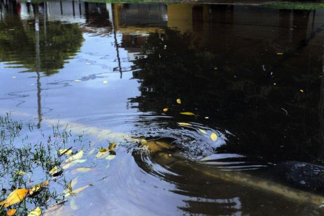"""""""Fue un diluvio sin precedentes en la historia, por eso a la gente le ha..."""