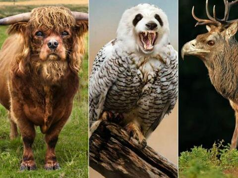 Una artista creó animales híbridos a partir de fotograf&ia...