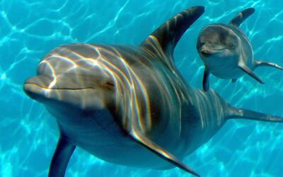 Hawaii quiere que dejen dormir a sus delfines