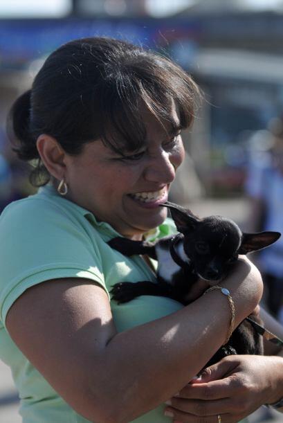 Entre los competidores estaba Mía, la perra de Miss Guatemala, Jessica S...