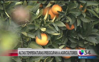 Bajas temperaturas amenazan las cosechas