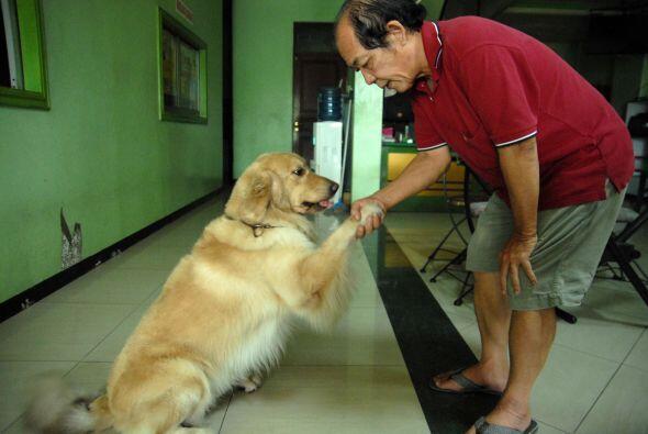 Ambos perros también están contentos cuando comen con su dueño.