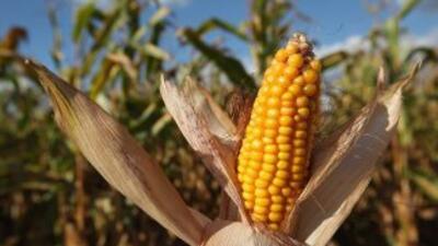 Monsanto pidió $85 mil al agricultor y defendió que esos granos están pr...